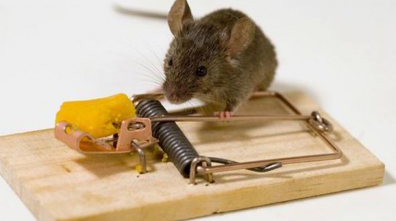 How to Choose the Best Mouse Trap