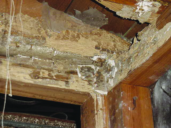 Don't Let Termites Take a Bite Out of Your Home